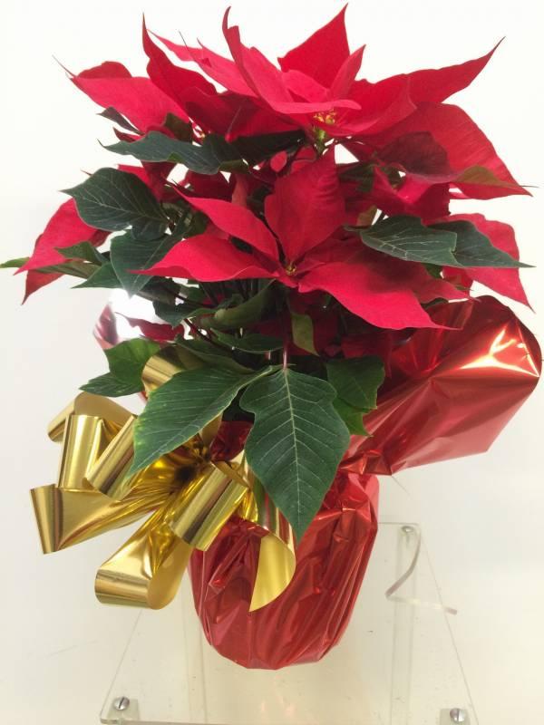 planta-de-navidad-regalo-ideas-navidad-reyes